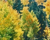 Osha Pass in Angel Fire New Mexico  8x14 fine art print Fall Autumn Seasonal Art