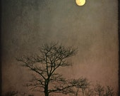 landscape photography full moon nature tree fine art photography home decor office decor