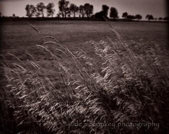 field photograph, home decor, Fine Art Photograph landscape photography