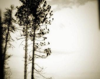 Tree photograph, sepia, nature print, home decor, Fine Art Photograph fathers day