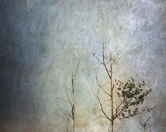 Stormy sky photograph, tree print, surreal, home decor, Fine Art Photograph Autumn Decor