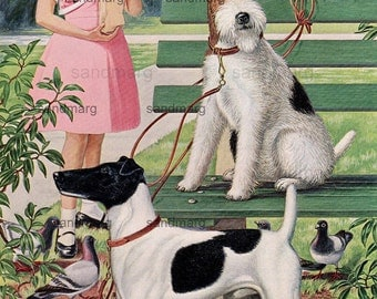 Vintage Dog Illustration Smooth and Wired Haired Fox Terrier