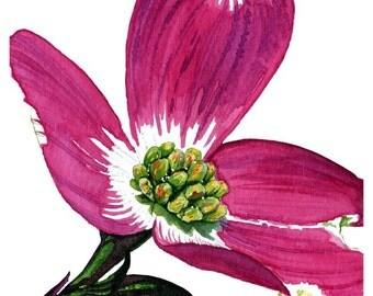 Single Bloom - 1 of 3 Dogwood Watercolor Print Series