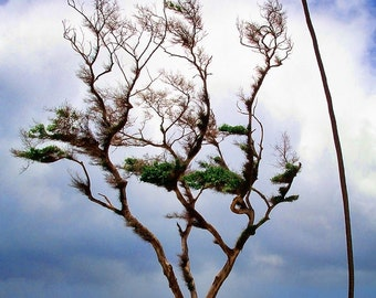 Windswept Beach - Fine Art Photograph - Tropical Beach - Beach Photo - Hawaii Photo - Home Decor - Office Decor