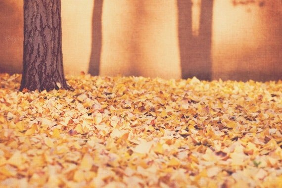 nature photography, ginkgo tree photograph, Winter in L.A., golden orange spice mustard yellow brown, blanket of leaves, autumn decor