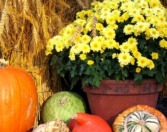 Fall Harvest Fragrance Oil Low Shipping