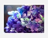 Flower Photography, blue, purple, hydrangea, lens flares, Blue Hydrangea nature fine art photography print 8x12 - moonlightphotography