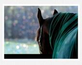 Horse Photography, barn, aqua, winter, gray, Winter's Closing In, fine art photography print
