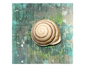 Turquoise Sea Snail Shell Fine Art Photograph Seashell Ocean Sea Beach House Decor Nature Green Weathered Print