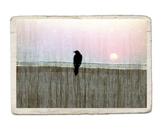 Bird Photograph Sittin' On The Fence Of The Bay Crow Raven Silhouette Sunset Sunrise Beach Pastel Nature