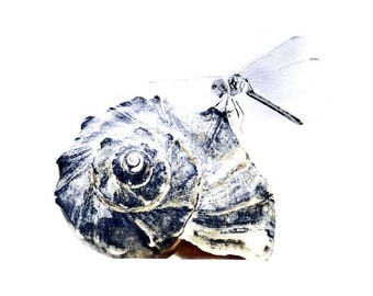 Dragonfly On Whelk Fine Art Photograph Seashell Shell Indigo Blue Navy Beach Decor Ocean Sea Nautical Nature