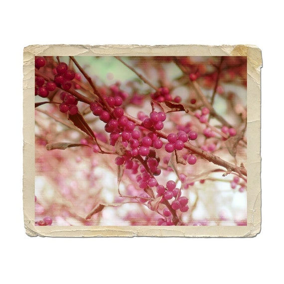 Botanical Photograph Pink and Red Berries Shabby Chic Decor Vintage Style Fine Art Nature Romance Branches