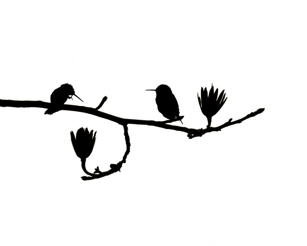 hummingbird art nature print birds black white minimalist. Black Bedroom Furniture Sets. Home Design Ideas