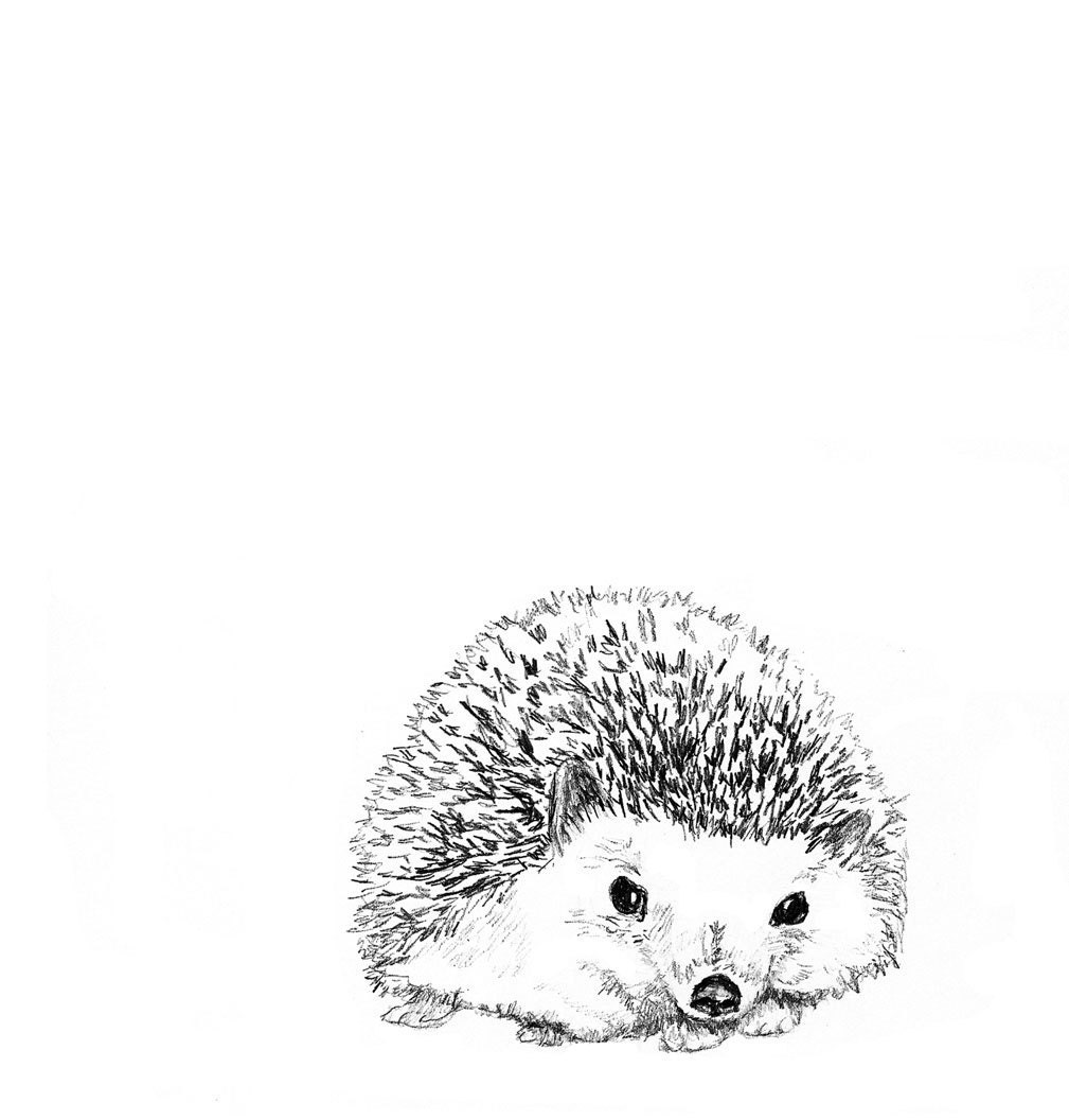 Hedgehog Illustration Hedgie in Black and White by corelladesign