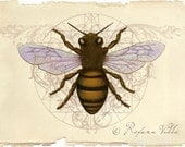 Honey Bee Original Art Print - Home Decor for the Naturalist - Sacred to ancient culture, Apis mellifera - Supreme Alchemist