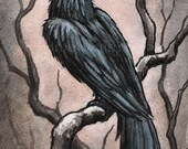 Signed and matted print of original Black Bird I watercolour painting by Eden Bachelder, ready to frame. Raven, crow, corvid