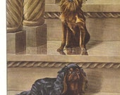 1919 Print King Charles Spaniel and Brussels Griffon Dogs Pose on Steps With Columns by Louis Agassiz Fuertes