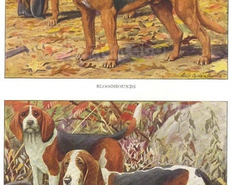 Vintage 1900s Bloodhound Beagle and Basset Dogs by Louis Agassiz Fuertes