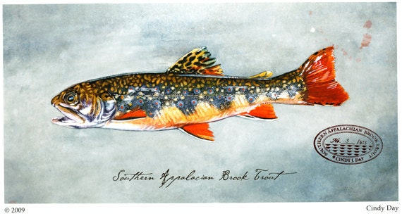 Appalachian Brook Trout Giclée Print