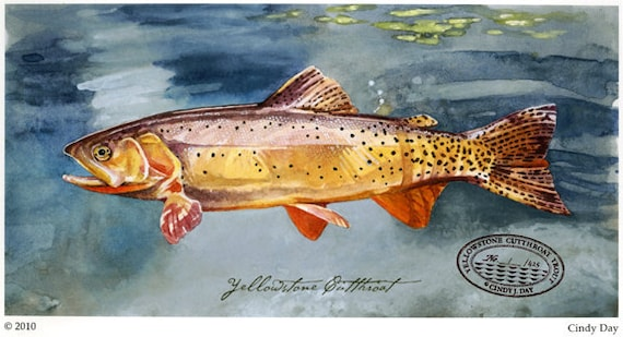 Yellowstone Cutthroat Trout Giclée Print