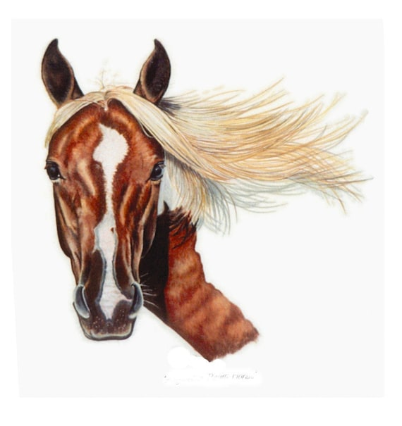 Paint Horse Portrait in Colored Pencil by B.Bruckner