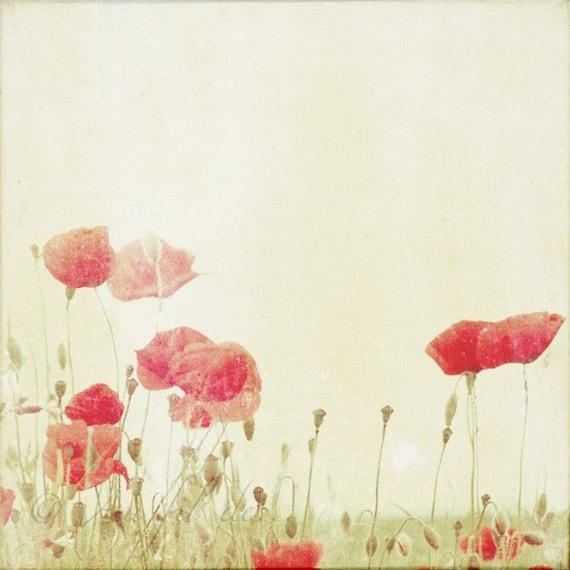 Poppies photograph. Fine art photography print. 8x8 (20x 20cm)