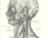 1926 Human Anatomy Print - Lymph Glands and Vessels - Vintage Antique Medical Anatomy Art Illustration for Doctor Hospital Office