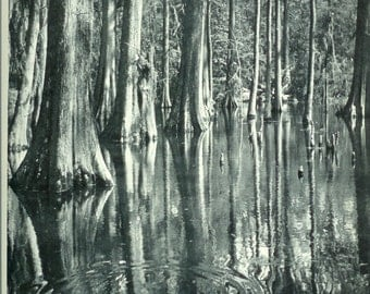 1940s Vintage Photograph - Cypress Gardens - Wonderful 40s Vintage Book Art Photograph Great Vintage Print for Cottage or Cabin