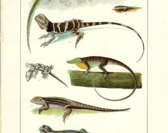 1912Animal Print - Lizards - Vintage Antique Home Decor Book Plate Art Illustration for Framing 100 Years Old