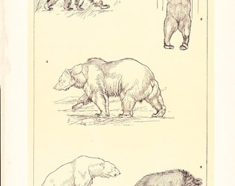 1903 Animal Print - Bears - Vintage Antique Home Decor Book Plate Art Illustration for Framing 100 Years Old