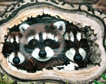 Shy Raccoons Art Print