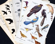 Vintage Bird Illustrations- 26 full color & black and white bird plates, illustrated book pages for crafts, bird pictures