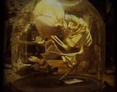 Skeleton Art Print, Safe, 5x5 Natural History Photography Print, Halloween Decoration