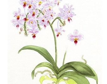 Orchid - Art Print