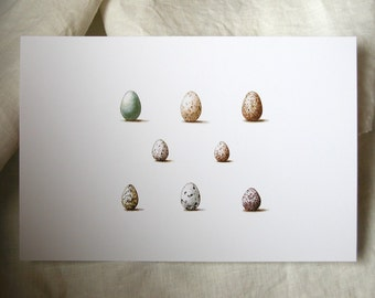 Wild Bird Eggs watercolor original gardening art natural history woodland home decor reproduction print