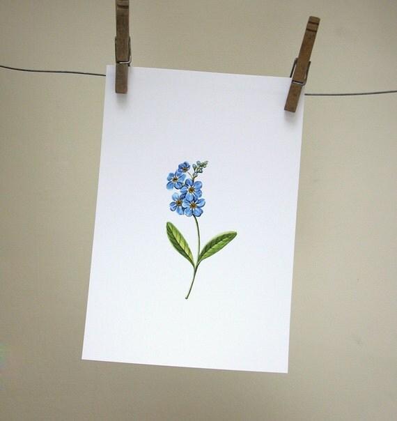 Forget Me Not original botanical illustration gardening art print spring home decor