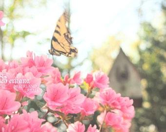 Let Your Soul Take Flight Whimsical Fine Art Print Original Flower Shabby Chic Dreamy Wonderland