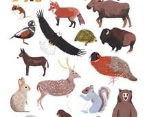 North American Animals Print