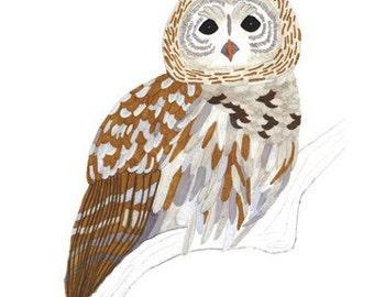 Barred Owl 5x7 Print
