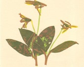 Trout Lily, Pressed Flower, Linoleum Reduction Print