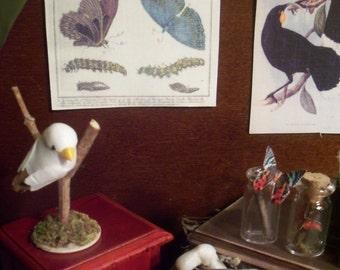 Miniature Natural History Chart --- Butterflies