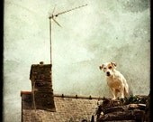 Chien de Guet - Fine Art Print - Dog Photography - Etsy Wall Art - TFTeam - Animals