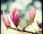 No Spring without Magnolia - 8x8 Fine Art Print - Nature Photography -  TTV - Say It With Flowers - Etsy Wall Art - TFTeam