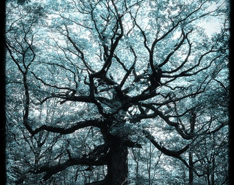 Le Chêne des Hindrés - Fine art Print  - Nature Photography - For Tree Lovers - Etsy Wall Art - TFTeam