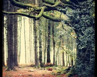 Hetre de Ponthus - Fine art Print - Nature Landscape Photography - For Tree Lovers - Etsy Wall Art - TFTeam