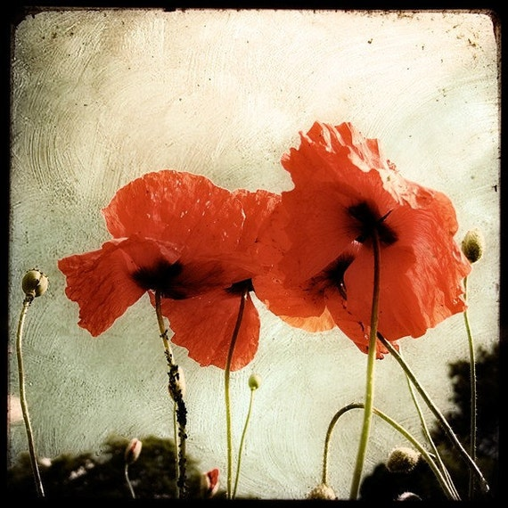 Les Coquelicots - Fine Art print - Nature Photography - Beige Red TTV - Say It With Flowers - Etsy Wall Art - TFTeam