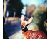 Toy Polaroid • Deer Polaroid •8 x 10 Polaroid Print • Photo for Childs Room •Whimsical Photo • Nursery Decor