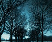 Montreal Art Winter Photography Snowy Trees Blue Nature photography Canadian Sellers Mont Royal Landscape - Winter's Bone