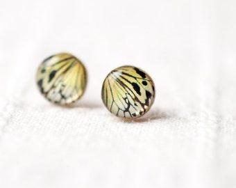 Butterfly earrings - Butterfly wing earring studs  - Butterfly jewelry - Everyday earrings - Mustard tiny earrings - Ear posts (E093)