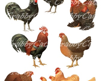 Chickens Digital Collage - Seven Hens Roosters, Vintage Poultry Images, Clean Artwork Full Color PDF/JPG CrabbyCats Crabby Cats